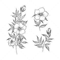 Vintage Botanical Illustration Flower