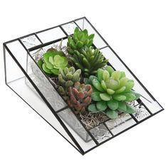 Micro Landscape Glass Succulent Planter Box/Angled Terrarium Display Stand #Unbranded