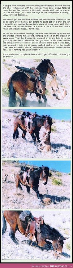Every hand who heads to the hills to work, hunt or play deserves a mule like this... good as gold