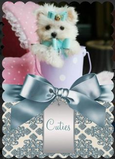 ♥♥♥ Teacup Maltese! ♥♥♥ Bring This Perfect Baby Home Today! Call 954-353-7864 www.TeacupPuppiesStore.com