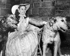 Irish Wolfhounds with Jean Simmons