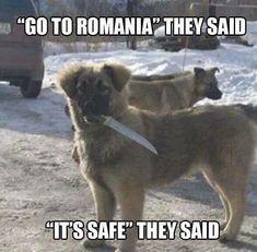 Go To Romania They said!