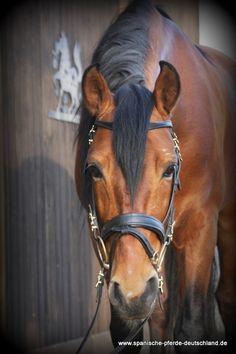 Artista - spanische-pferde-deutschls Webseite!