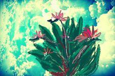 Bird of paradise bush