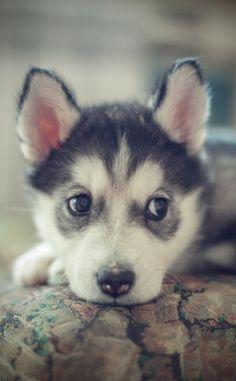 I want himmm:,)