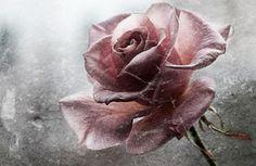 Broken - Flowers Wallpaper ID 1252087 - Desktop Nexus Nature