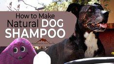 How to Make Natural Dog Shampoo - YouTube Homemade Dog Shampoo, Natural Dog Shampoo, Mountain Rose Herbs, Pet Care, Pets, Budget, Nature, Animals, Youtube