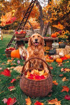 Autumn Cozy, Autumn Feeling, Autumn Scenery, Autumn Aesthetic, Fall Harvest, Harvest Season, Fall Season, Fall Halloween, Halloween Icons