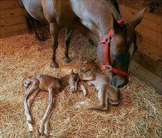 So ein wertvolles Mutterglück