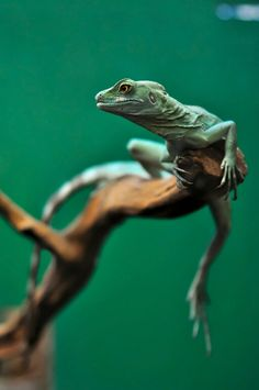 Beautiful reptiles.