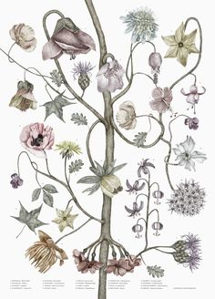 Illustrated prints by Stockholm - based artist Jonna Fransson. Plant Illustration, Wonderwall, Sign Printing, Freelance Illustrator, Botanical Prints, Botanical Drawings, Hades, Flower Prints, Floral Watercolor