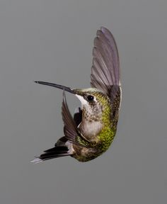 Ruby-throated Hummingbird, by Gail Miller | Audubon Magazine 2012 Photo Awards Top 100