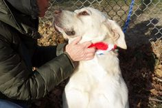 SAFE 12/30  SECOND CHANCE RESCUE   **THADDEUS** – A1099807