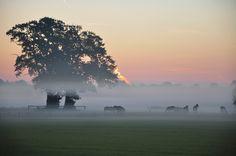 Landschap nabij Hellendoorn, vroege ochtend in de lente