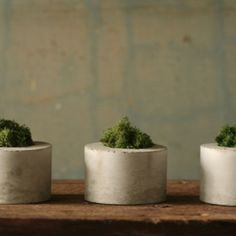 Concrete Moss Trio - Many people seek color when looking to decorate their interiors with indoor plants, but there's something very endearing about this Concrete Moss T. Small Plants, Indoor Plants, Concrete Planters, Planter Pots, Danish Modern Furniture, Vintage Pottery, Diy Projects To Try, House Projects, Project Ideas