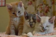 I could honestly pin all the kitten pictures from this blog...but I wont. elw85