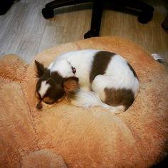 양해연 @chokomi123 양갱이 코 자고있...Instagram photo | Websta (Webstagram)