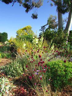 Anemone Times: Beth Chatto's Gravel Garden