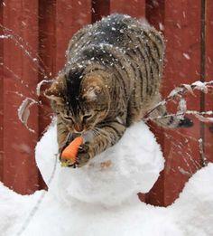 15 photos de chats qui prouvent que ce sont de vrais petits voleurs !