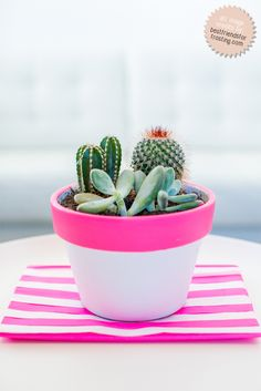 Everyone needs a little plant life to spruce up the office // Easy DIY Hot Pink Clay Pot Makeover + succulent & cactus arrangement Cacti And Succulents, Potted Plants, Pink Succulent, Potted Garden, Decoration Cactus, Plants Are Friends, Best Indoor Plants, Indoor Cactus, Deco Floral