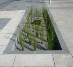 A simple stormwater infiltration garden in Melbourne