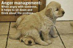 Anger management dog style