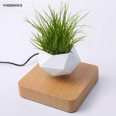 8 Cheap Things to Maximize a Small Bedroom . Cool Plants, Green Plants, Air Plants, Potted Plants, Succulent Plants, Floating Plants, Magnetic Levitation, Wood Plugs, Out Of Touch