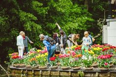 Tulip Island in the Vondelpark, Amsterdam : Festivals & Events, Sightseeing, Things To Do, Tours & Activities | Amsterdam Things to Do
