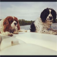 Boat dogs!