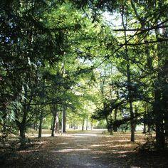 Licht und Schatten im Park
