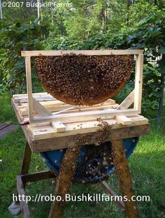 The Honey Cow barrel  bee hive is designed to miimic nature as much as possible. Unlike commercial hives, it does not have frames, foundation or excluders. Instead, it just has top bars, allowing the bees to do what they would in a fallen log: build beautiful, natural combs. Because it is less intrusive to the bees, it's easier to make and manage, which makes it a perfect beginners backyard hive.