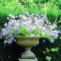 Lucas stone Troughs, Tazzas, Urns and Vases - Medium Victorian Tazza £132. Cotswold stone
