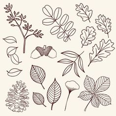 Autumn Illustrations Fall Harvest Line Drawings Clipart PNG Pumpkin Leaves Foliage Apple Picking DIY Thanksgiving Linework Leaf Drawing Easy, Fall Leaves Drawing, Line Drawing, Pumpkin Leaves, Autumn Leaves, Leaves Doodle, Draw Leaves, Fall Drawings, Fall Canvas