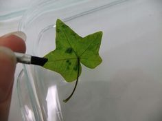 Place the leaf on a smooth flat surface and smooth with a brush.