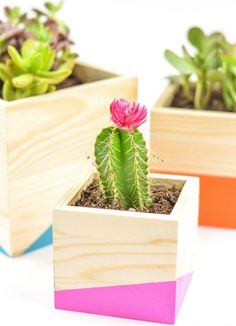 Dress your cacti up in color blocked planters that are easy to make with this simple DIY project. wood projects projects diy projects for beginners projects ideas projects plans Wood Projects That Sell, Wood Projects For Beginners, Small Wood Projects, Scrap Wood Projects, Easy Woodworking Projects, Projects To Try, Woodworking Tools, Woodworking Organization, Unique Woodworking