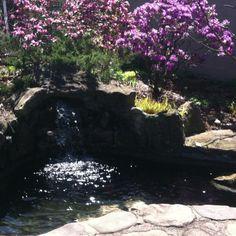 Koi pond in garden :D - AMH