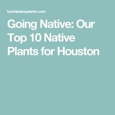 Going Native: Our Top 10 Native Plants for Houston