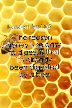 Random fact #5....wait that means it's bee vomit!! Ahhhh still tastes good though