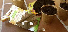 Scharzwurzel anbauen - so geht's und Schwarzwurzeln vorziehen - ein Experiment. Gute Nachbarn der Schwarzwurzel sind Kohl, Lauch, Spinat und Salat.