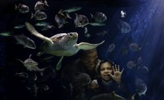 Virginia Living Museum features an awesome aquarium where you can see fish of various species found in our rivers, bay & our mighty nearby ocean.