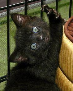 Love black kitties!