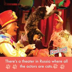 """Moscow Cats Theatre is the only place on a planet where animals call not simply cats and dogs and is proud call actors. They were given free rain as much as possible to show the creative abilities. As soon as on a scene the magic curtain fluffy actors with pleasure opens give to the audience a holiday. Today in the Crystal lock of a cat 200 cats of different breeds live and work. Kind but a proud cat and a cat from bronze meet you at an entrance. These are theater mascots """"inviting cats""""…"""