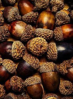 macro photography acorns autumn fall home decor kitchen decor Autumn Day, Autumn Leaves, Autumn Song, Soft Autumn, Seed Pods, Autumn Inspiration, Macro Photography, Fall Season, Earthy
