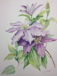 Clematis paars in aquarel