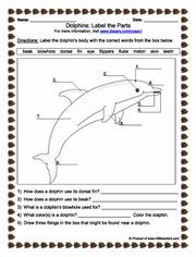 Label the parts of the dolphin on this image