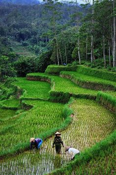 My Asian Favorit Village Photography, Nature Photography, Travel Photography, Beautiful Nature Wallpaper, Beautiful Landscapes, Yogyakarta, Laos, Farm Village, Beautiful Places