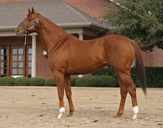 Valor Farm - Early Flyer  Got to see this amazing stallion in person at Valor Farms in Aubry Tx.