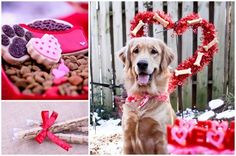 A Valentine's Day PAWty for your dog! How cute is this! Change the color theme and you could use it for a birthday PAWty. The suggestions are adorable!