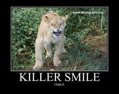 Liberty - Killer Smile... I has it.   #Liberty #Lion #NoahsArk #Smile    www.noahs-ark.org