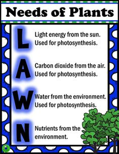 Display this colorful, information packed poster for student reference during your Life Science units. Compliments the study of photosynthesis and the carbon dioxide - oxygen cycle.Includes black and white 1/4 page versions with fill in the blank spaces for student notebooks.
